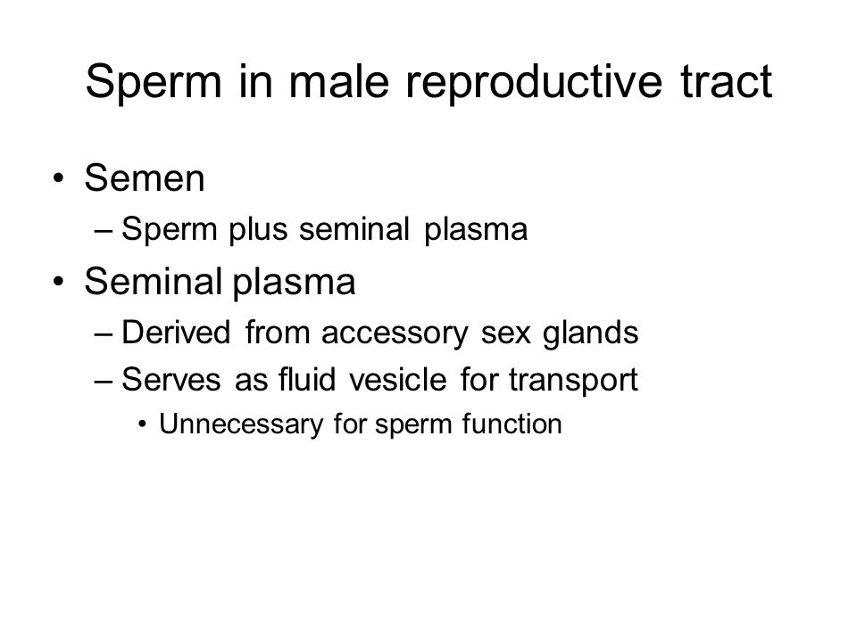 Sperm in male reproductive tract