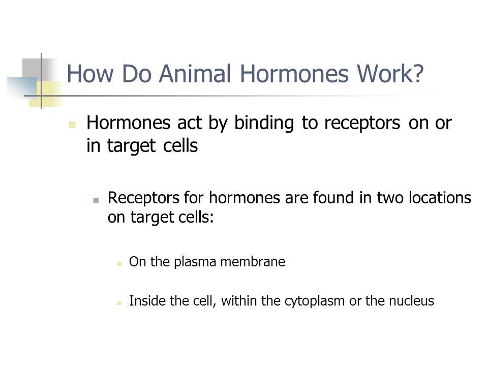 How Do Animal Hormones Work
