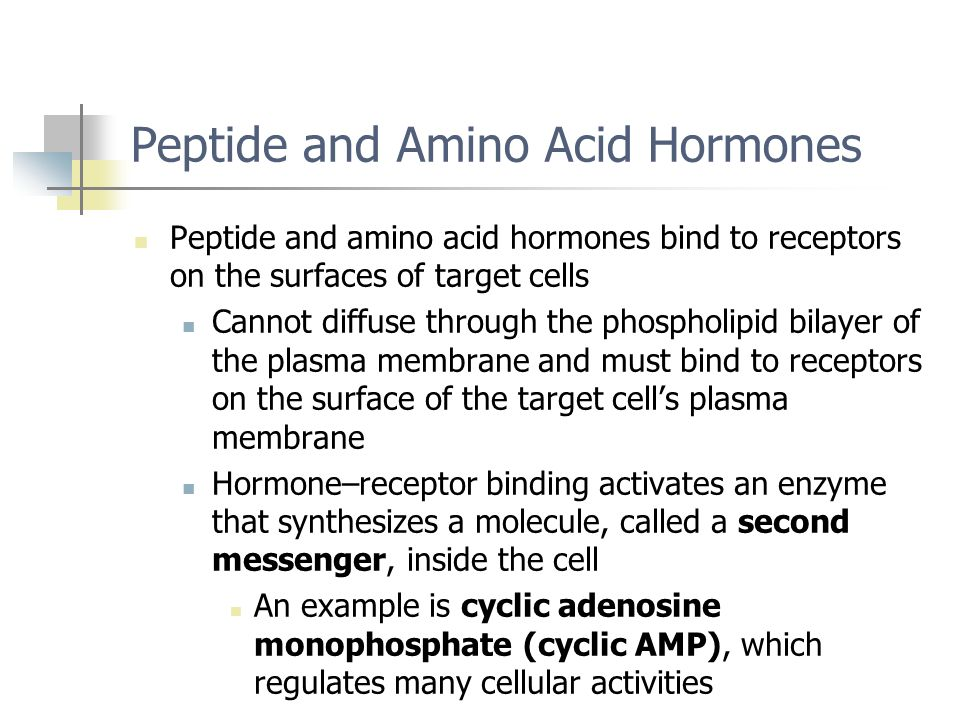 Peptide and Amino Acid Hormones