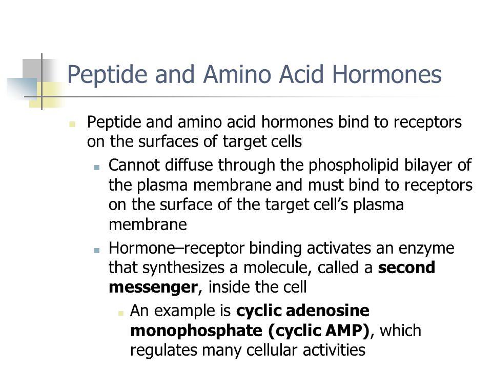 Peptide and Amino Acid Hormones