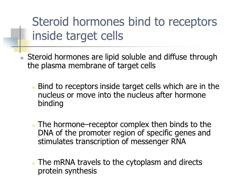 Steroid hormones bind to receptors inside target cells
