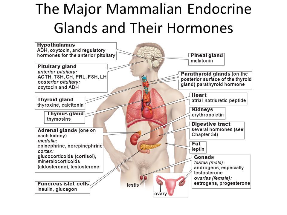 The Major Mammalian Endocrine Glands and Their Hormones