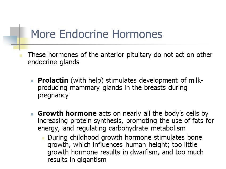 More Endocrine Hormones
