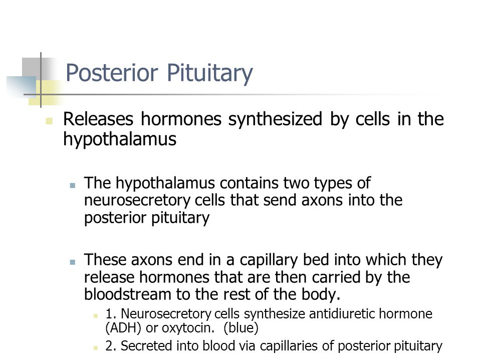 Posterior Pituitary Releases hormones synthesized by cells in the hypothalamus.