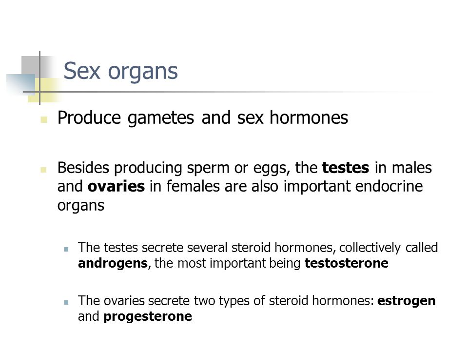Sex organs Produce gametes and sex hormones