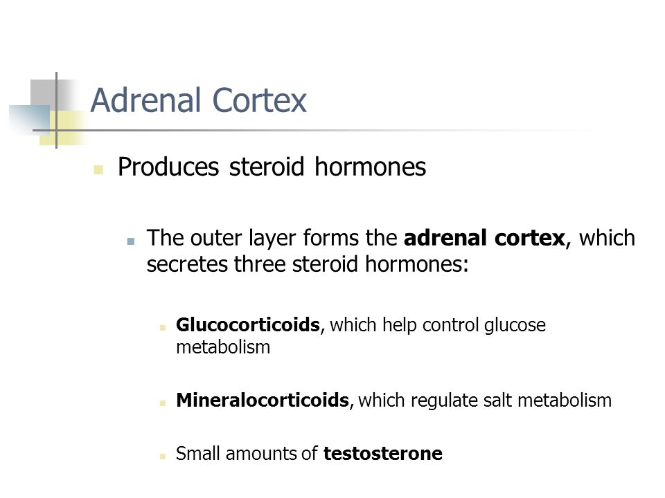 Adrenal Cortex Produces steroid hormones