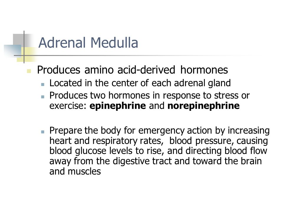 Adrenal Medulla Produces amino acid-derived hormones