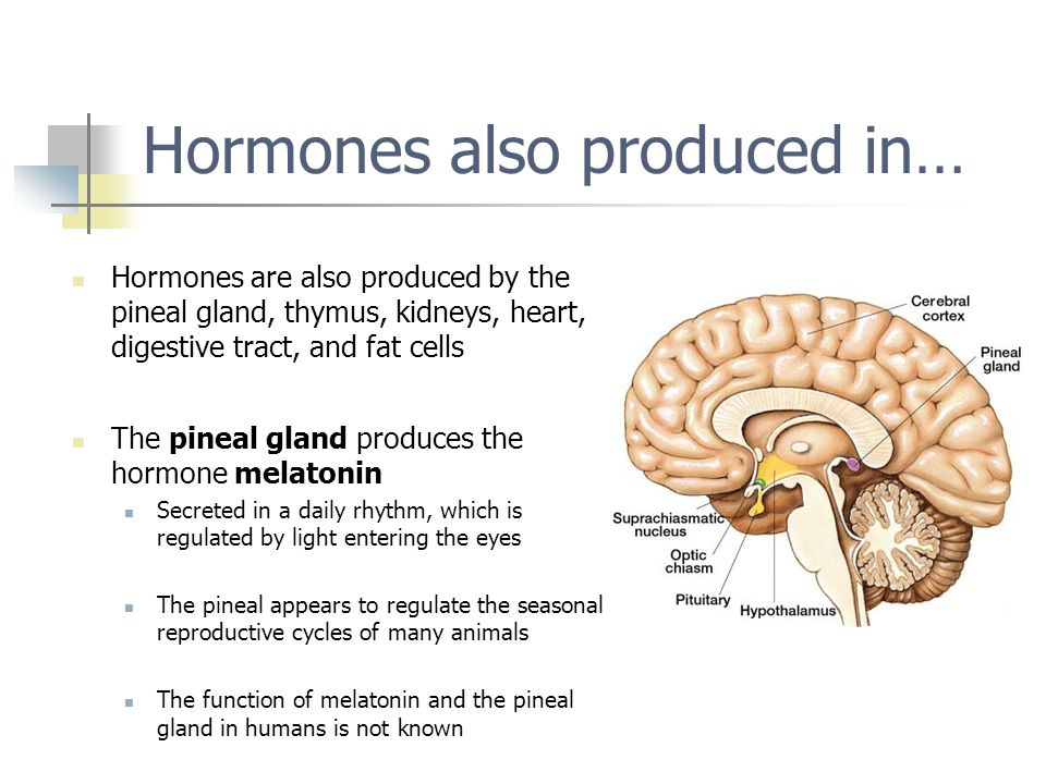 Hormones also produced in…
