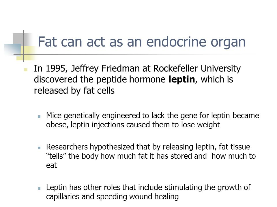 Fat can act as an endocrine organ
