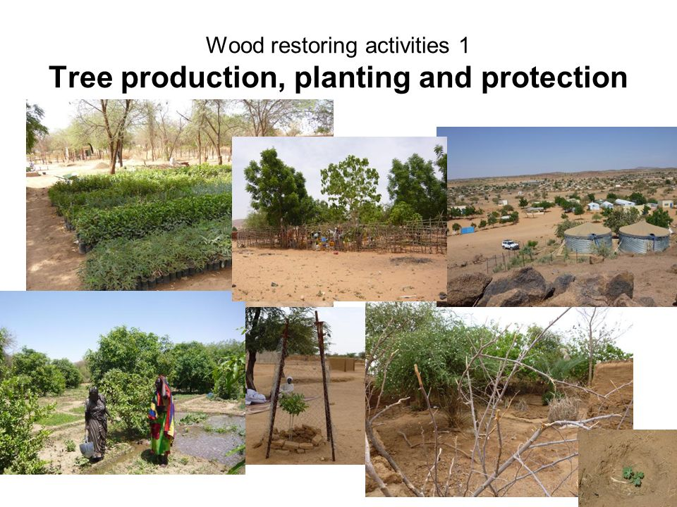 Wood restoring activities 1 Tree production, planting and protection