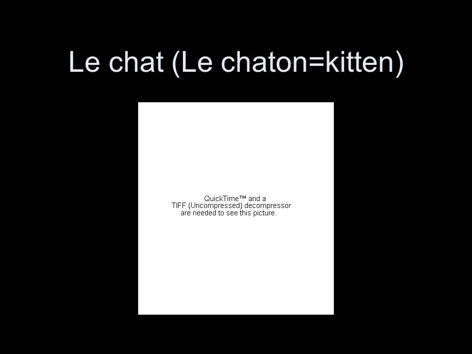 Le chat (Le chaton=kitten)