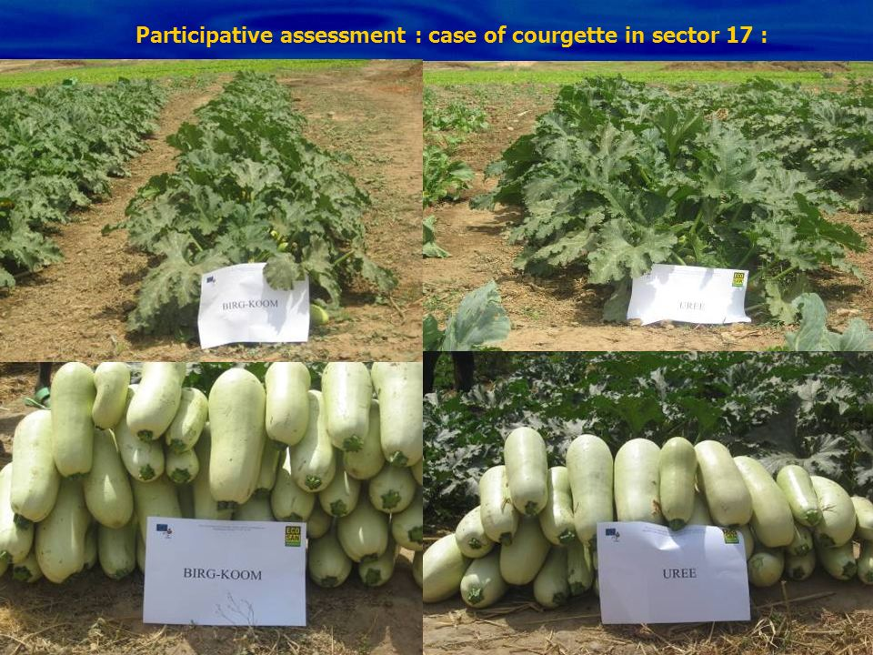 Participative assessment : case of courgette in sector 17 :