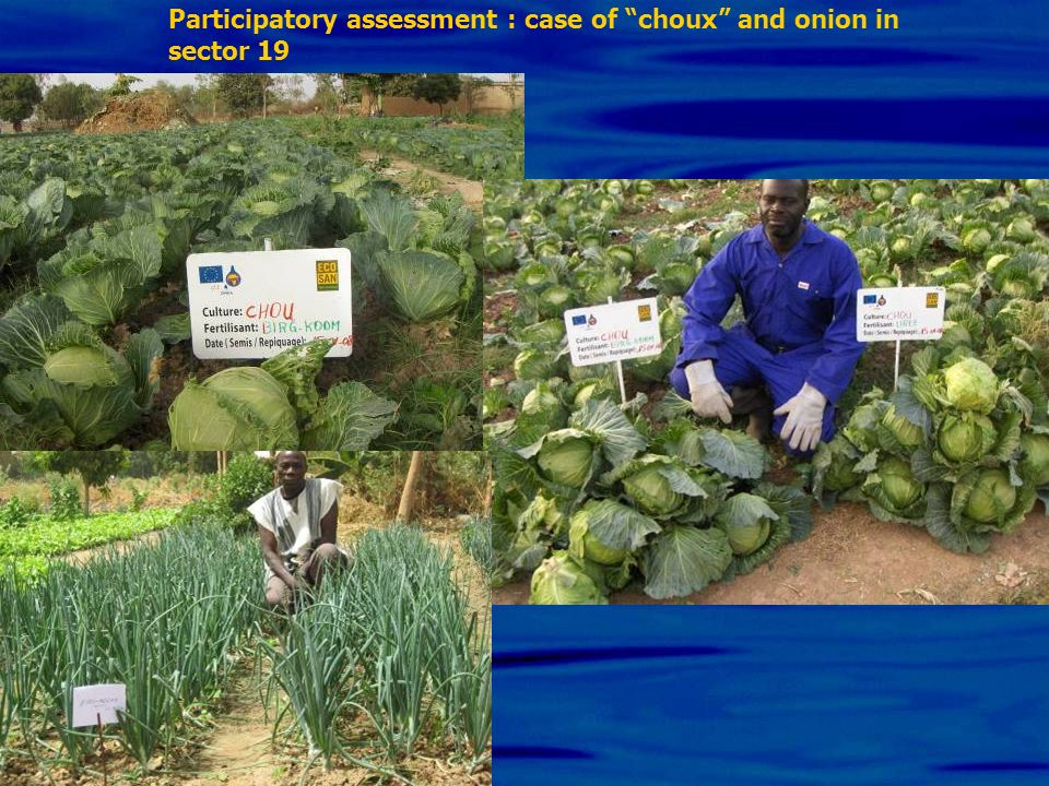 Participatory assessment : case of choux and onion in sector 19