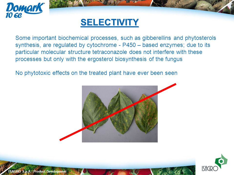 SELECTIVITY Some important biochemical processes, such as gibberellins and phytosterols.