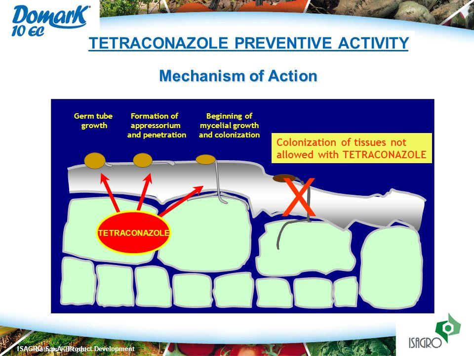 TETRACONAZOLE PREVENTIVE ACTIVITY