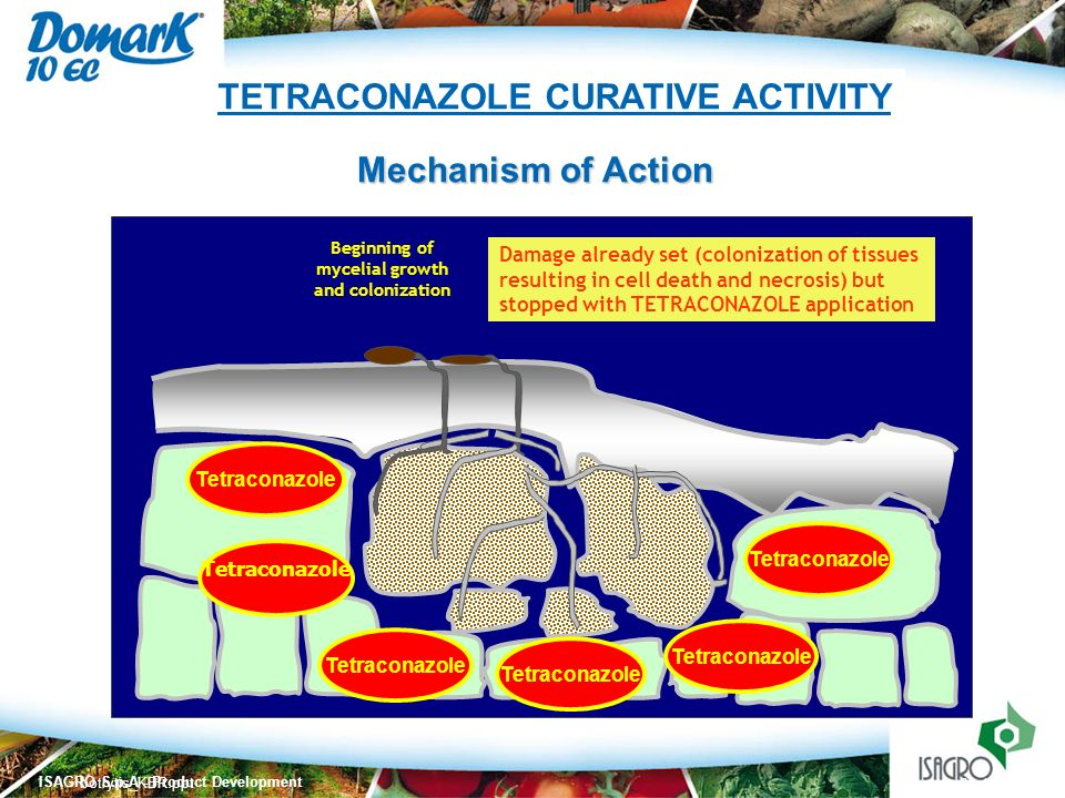 TETRACONAZOLE CURATIVE ACTIVITY