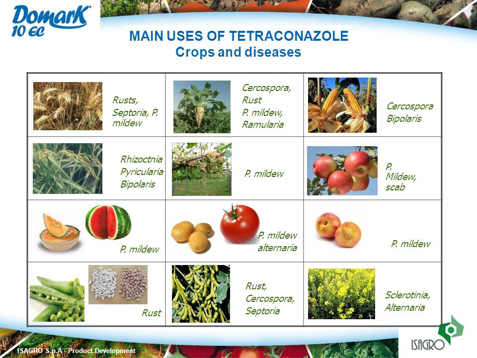 MAIN USES OF TETRACONAZOLE
