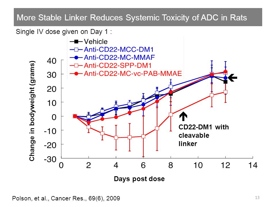 More Stable Linker Reduces Systemic Toxicity of ADC in Rats