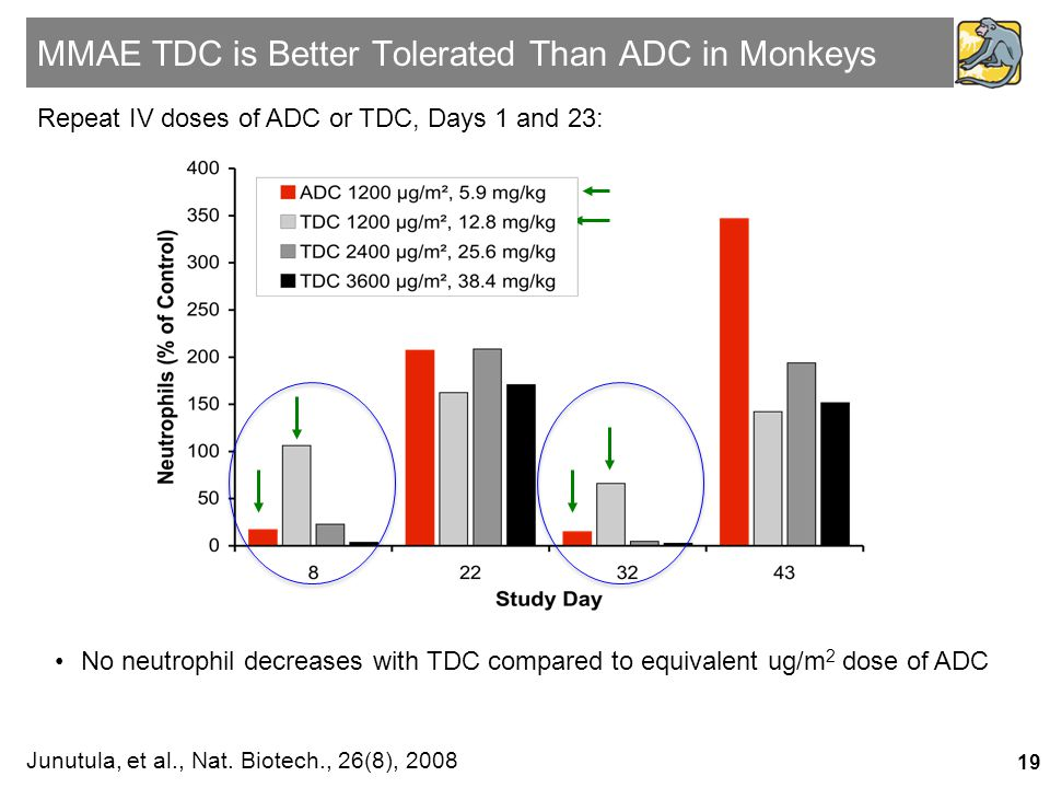 MMAE TDC is Better Tolerated Than ADC in Monkeys