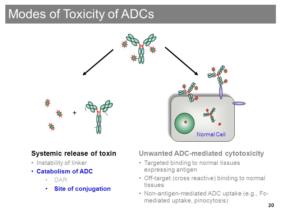 Modes of Toxicity of ADCs