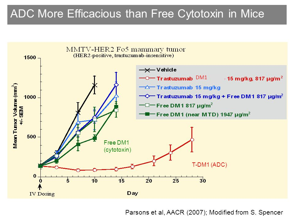 ADC More Efficacious than Free Cytotoxin in Mice