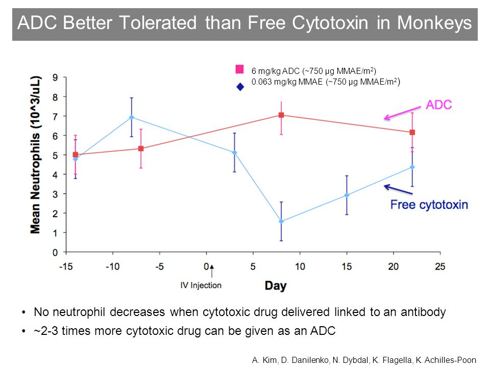 ADC Better Tolerated than Free Cytotoxin in Monkeys