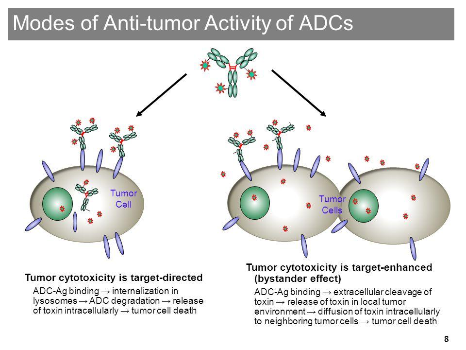 Modes of Anti-tumor Activity of ADCs