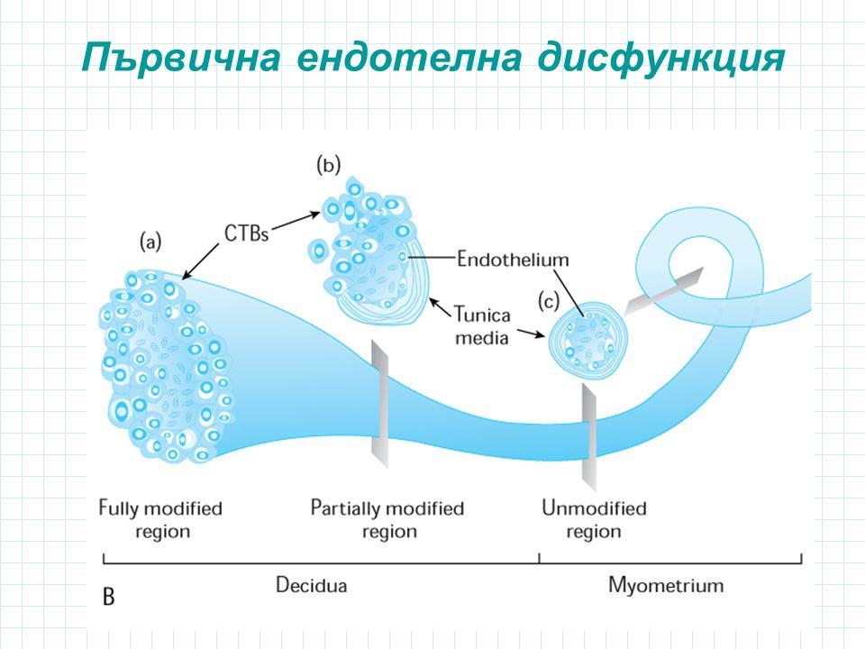 Първична ендотелна дисфункция
