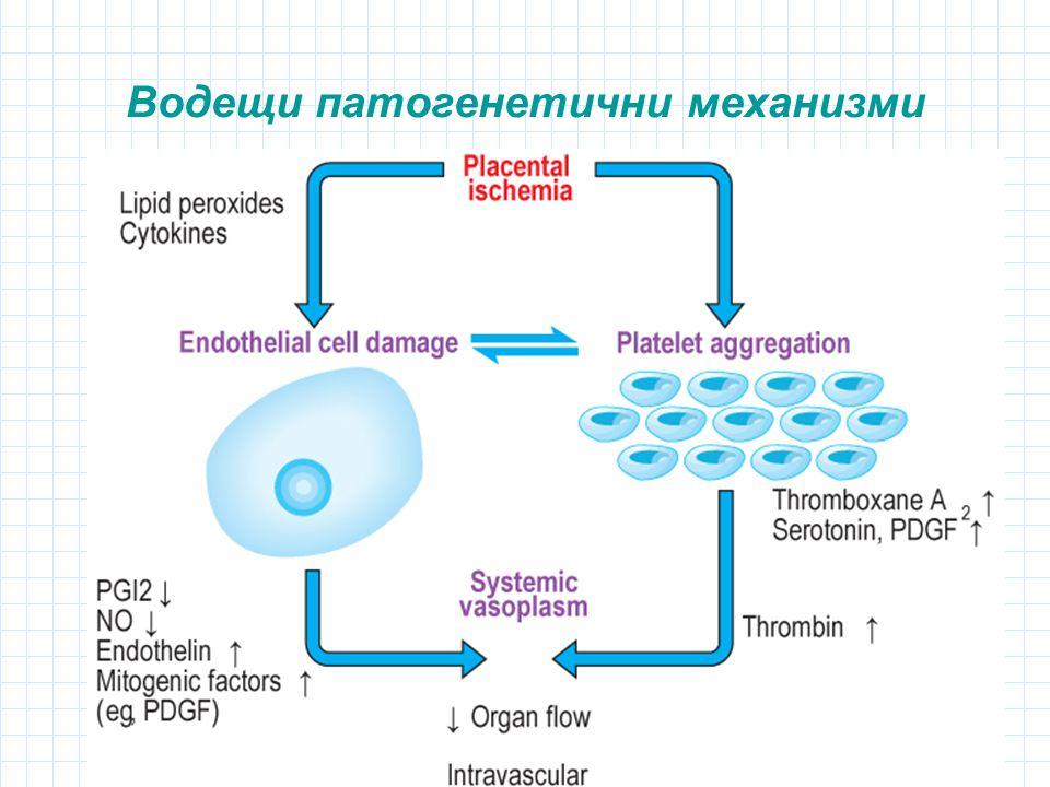 Водещи патогенетични механизми
