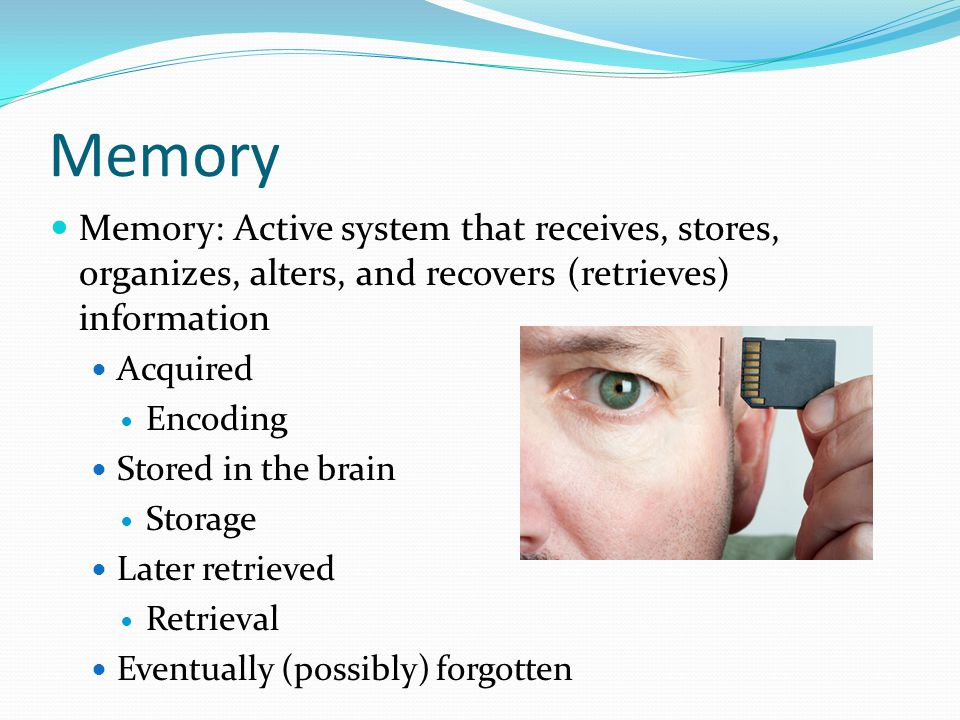 Memory Memory: Active system that receives, stores, organizes, alters, and recovers (retrieves) information.