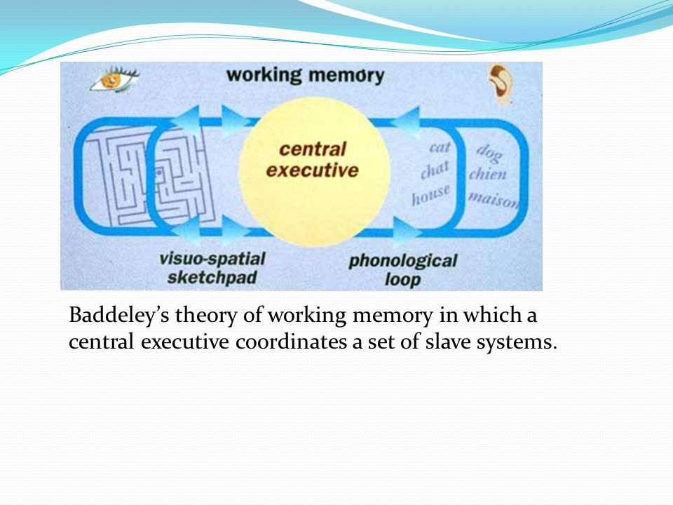Baddeley's theory of working memory in which a central executive coordinates a set of slave systems.