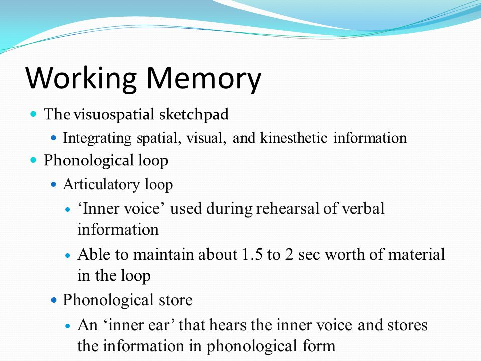 Working Memory The visuospatial sketchpad. Integrating spatial, visual, and kinesthetic information.