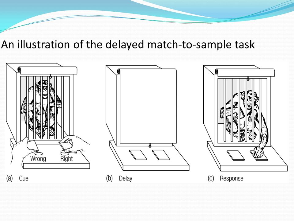 An illustration of the delayed match-to-sample task