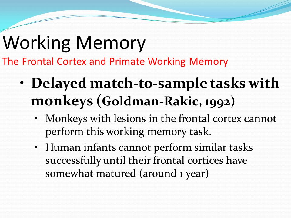Working Memory The Frontal Cortex and Primate Working Memory