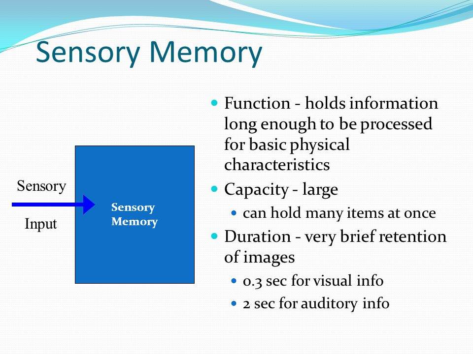 Sensory Memory Function - holds information long enough to be processed for basic physical characteristics.