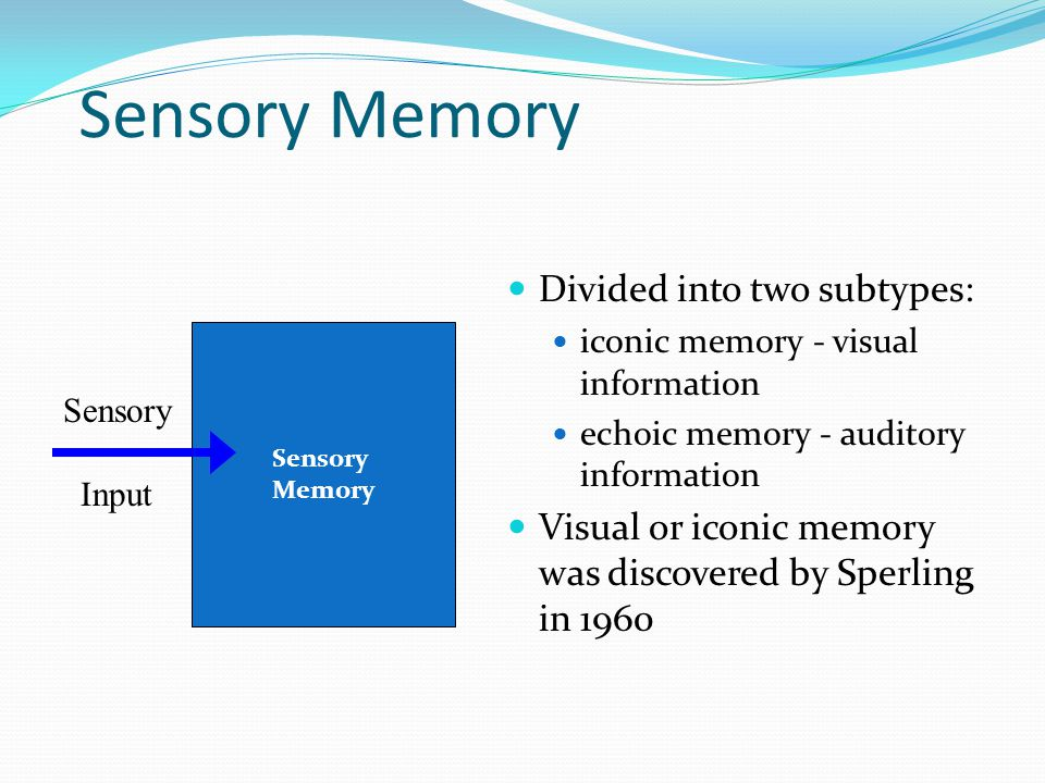 Sensory Memory Divided into two subtypes: