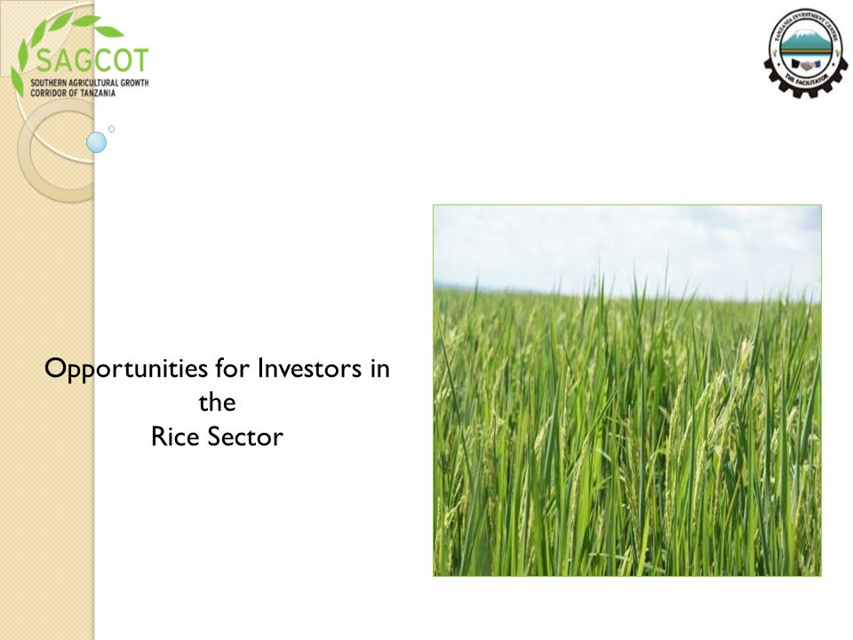 Opportunities for Investors in the Rice Sector