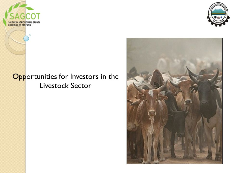 Opportunities for Investors in the Livestock Sector
