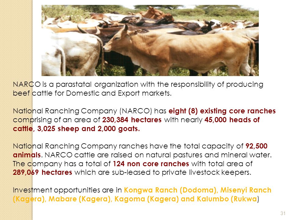 NARCO is a parastatal organization with the responsibility of producing beef cattle for Domestic and Export markets.