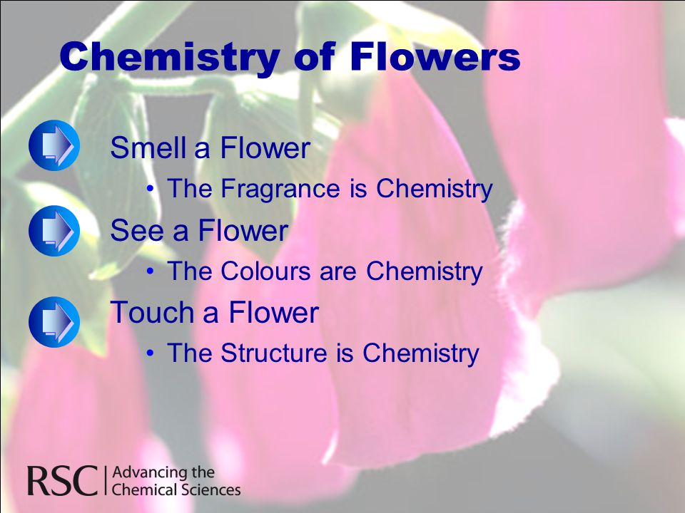 Chemistry of Flowers Smell a Flower See a Flower Touch a Flower