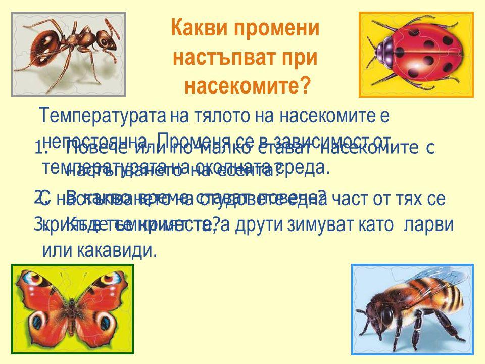Какви промени настъпват при насекомите