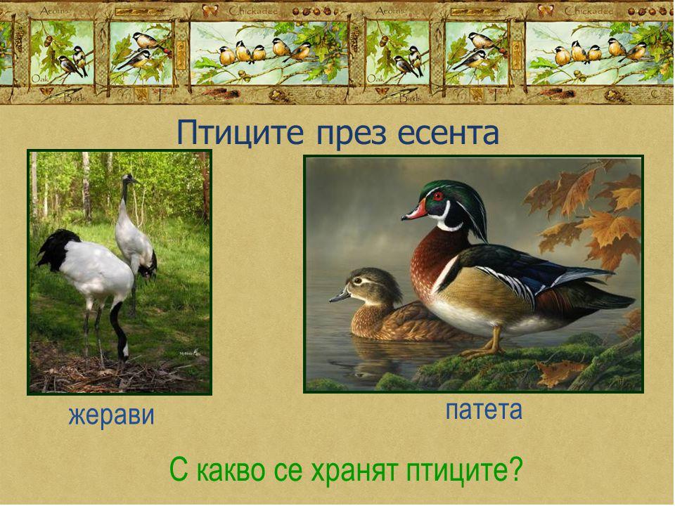 С какво се хранят птиците