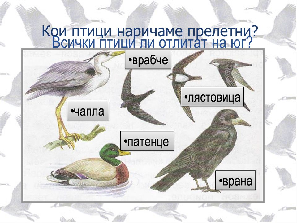 Кои птици наричаме прелетни