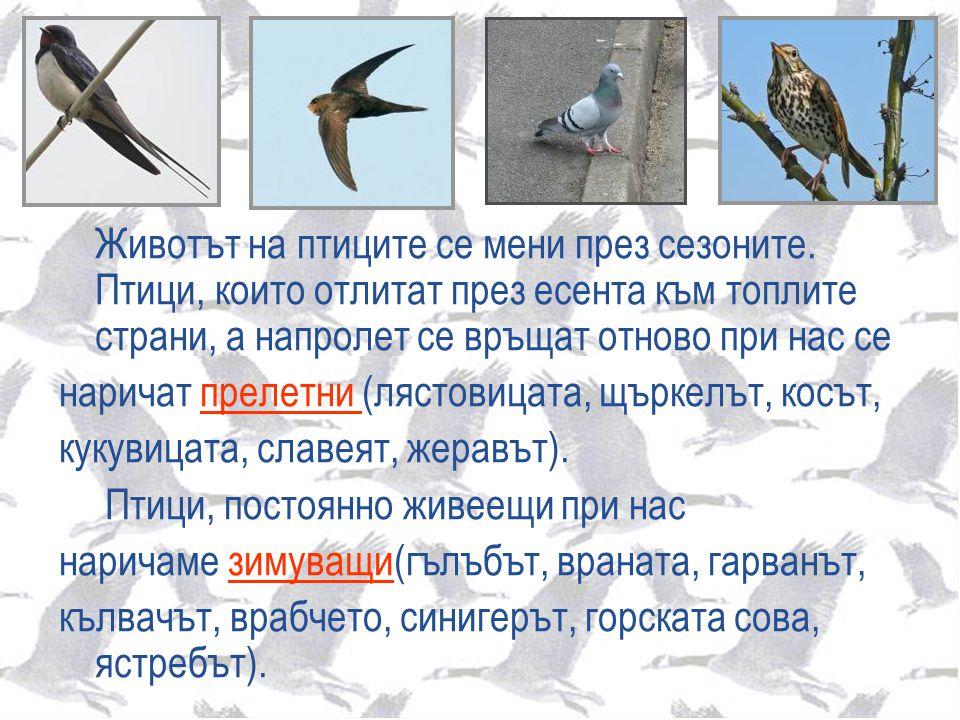 Животът на птиците се мени през сезоните