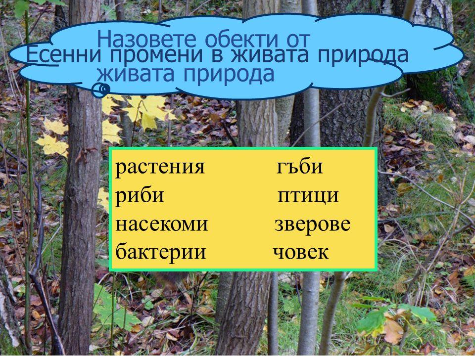 Назовете обекти от живата природа. Есенни промени в живата природа. растения гъби. риби птици.