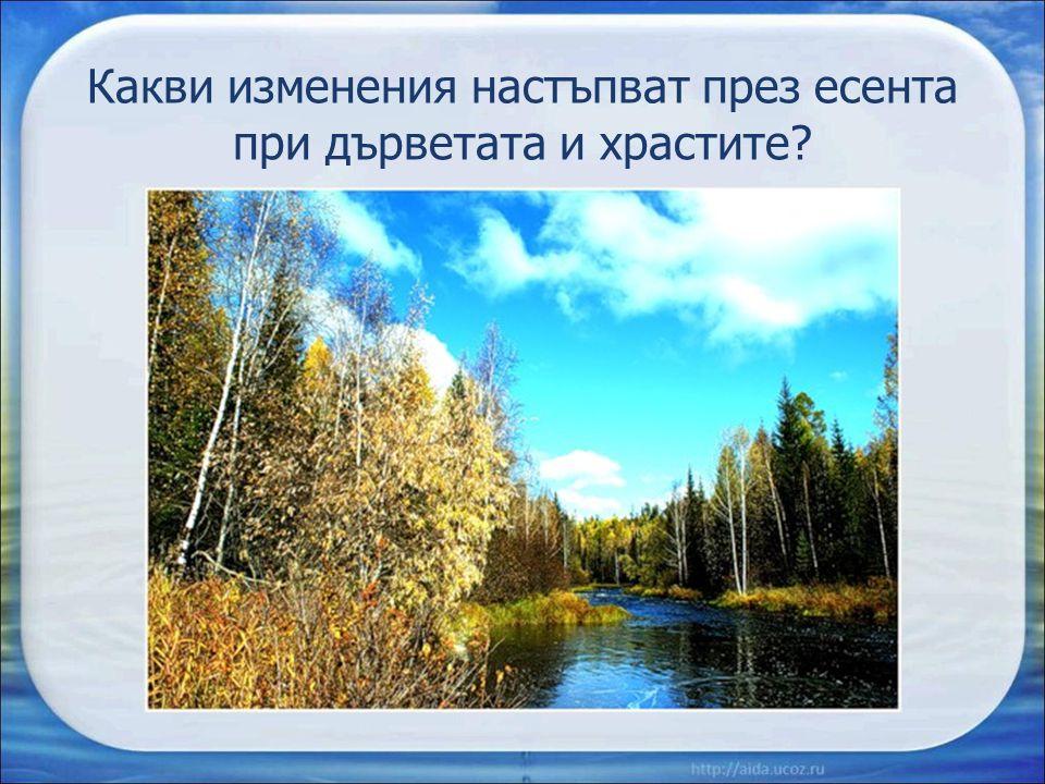 Какви изменения настъпват през есента при дърветата и храстите