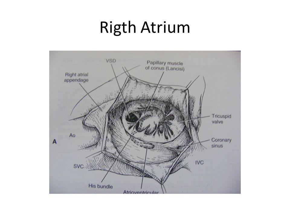 Rigth Atrium