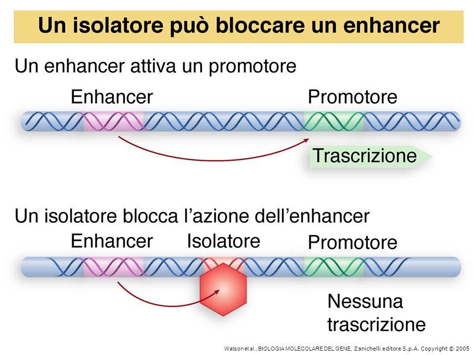 Watson et al. , BIOLOGIA MOLECOLARE DEL GENE, Zanichelli editore S. p
