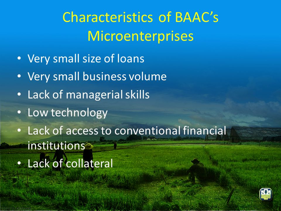 Characteristics of BAAC's Microenterprises