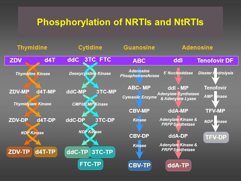 Phosphorylation of NRTIs and NtRTIs